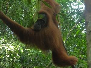 Bukit Lawang - Jungle Walk